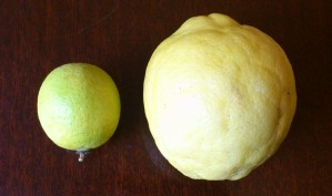 ...it's giant - here it is with a really big lime to show the size of it!