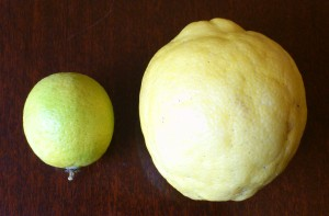 The giant lemon next to a rather large lime!!!